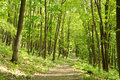Dense forest straight path in a green in russia Stock Images