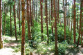 Dense green forest Royalty Free Stock Photo