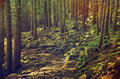 Dense green forest a mistic with mossy stones and path vintage retro image Stock Image