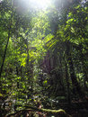 Dense jungle foliage in the tropical rain forest khao sok thailand Royalty Free Stock Photography