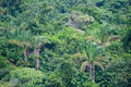 Dense jungle vegetation Royalty Free Stock Image