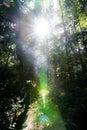 Dense rain forest photographer light fair Royalty Free Stock Photo