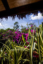 Dense tropical garden Royalty Free Stock Photo