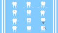Dental care tooth collection icon vector