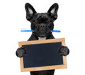 Dental toothbrush dog french bulldog holding with mouth at the dentist or veterinary and a blank empty placard or blackboard Stock Photography
