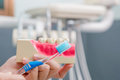 Dentist demonstrate tooth brushing Royalty Free Stock Photo