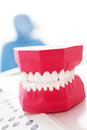 Dentists model of human teeth fake set at dentist office Stock Image