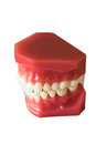 Denture on a good day and the light beautifully Royalty Free Stock Image