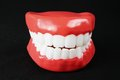 Denture model on black background Royalty Free Stock Image