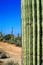 Desert with cacti in arizona Royalty Free Stock Images