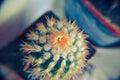 Desert cactus closeup with orange flower Royalty Free Stock Photo