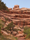 Desert canyon with red sandstone cliffs Stock Photography