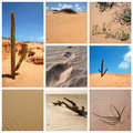 Desert collage Stock Photo