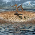 Desert flood island with dead tree and clock grass made of Royalty Free Stock Photo
