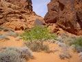 Desert Flora Stock Photo