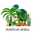 Desert flowers. Exotic plant, bush, palm tree, cactus vector set