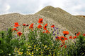 Desert and flowers somewhere between birda jebel timis district romania on may Stock Photography