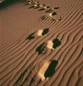 Desert Footprint Royalty Free Stock Images