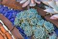 Desert Garden With Succulents