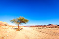 Desert landscape with a lone tree at timna national park in israel Royalty Free Stock Photos