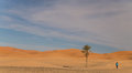 Desert landscape with palm Stock Photography