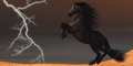 Desert Lightning Horse Royalty Free Stock Photo
