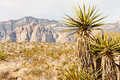 Desert Mountains with Cactus in Foreground Royalty Free Stock Photos