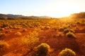 Desert Over Sunset, Nevada