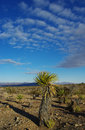 Desert plants, Nevada Royalty Free Stock Photos