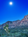 Desert with red rock mountains early in the morning with a brigh bright moon and joshua tree Royalty Free Stock Image