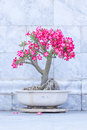 Desert rose on a marble background Stock Images