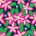 Desert rose seamless pattern Royalty Free Stock Photo