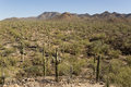 Desert with saguaro cactuses in the mountains in the background Royalty Free Stock Photo
