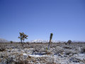 Desert snow snowstorm in mohave covers the cacti Stock Photos