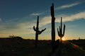 Desert sunset colection a beautiful arizona with saguaros cactus silhouette and cloud Stock Photo