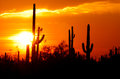 Desert sunset colection a beautiful arizona with saguaros cactus silhouette and cloud Stock Photos
