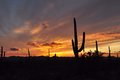 Desert sunset with a storm coming Royalty Free Stock Photo