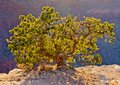 Desert tree Stock Image