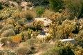 Desert vegetation of the of baja california Stock Photo