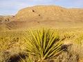 Desert vista mojave yucca in setting arizona usa Royalty Free Stock Photo