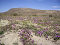 Desert vista with wildflowers bloom in the Stock Images