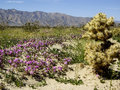 Desert wildflowers bloom in the Royalty Free Stock Photography
