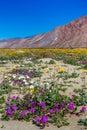 Desert Wildflowers Royalty Free Stock Photo