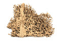 Deserted termite nest Royalty Free Stock Photo
