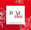 Design banner with lettering June is here logo. red Card for spring season with black frame and wthite roses. Promotion offer