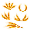 Design elements with wheat agricultural image natural golden ears of barley or rye objects for decoration bread packaging beer Stock Image