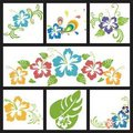 Design with flowers of hibiscus Royalty Free Stock Photo