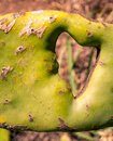 Heart shape in a cactus