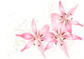 Design with realistic vector lily and ornament Royalty Free Stock Photography