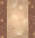 Design with seashells Stock Photos